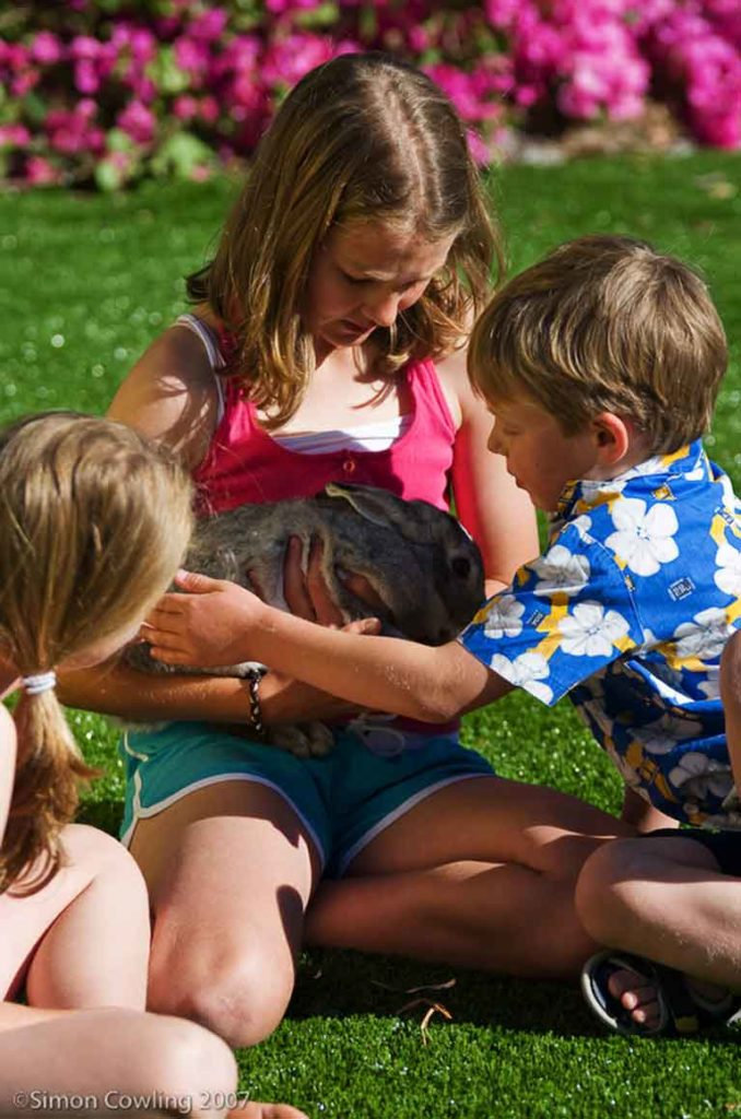 Children on Synthetic Lawn Holding Rabbit