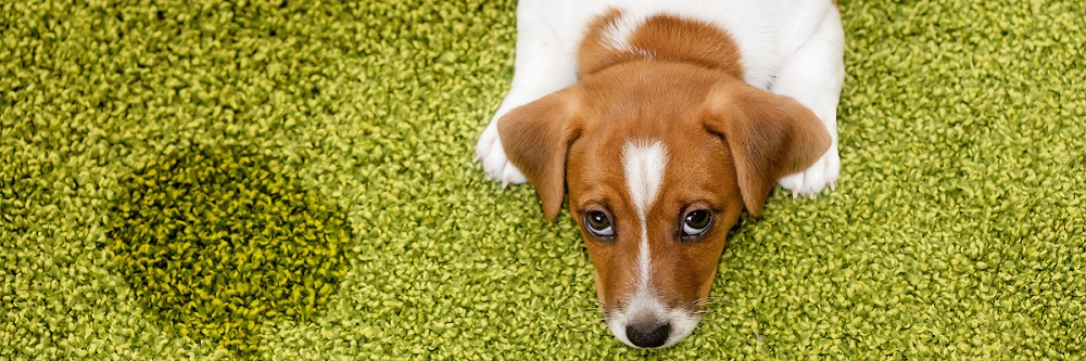 dog on artificial grass