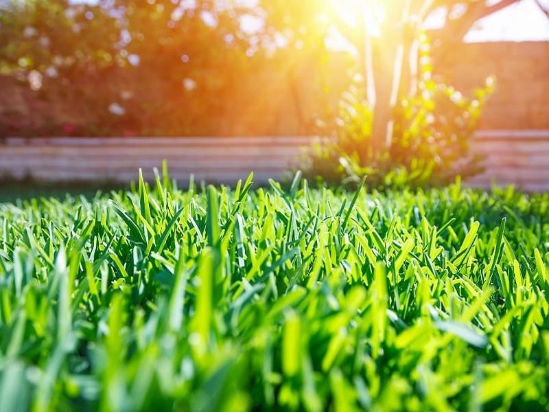 Avoid damage from reflective sunlight/heat - Green Planet Grass