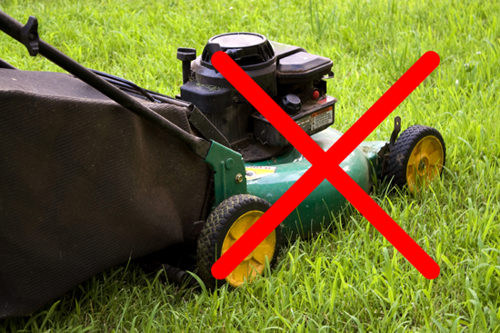 Synthetic Grass Vs Natural Turf - Green Planet Grass