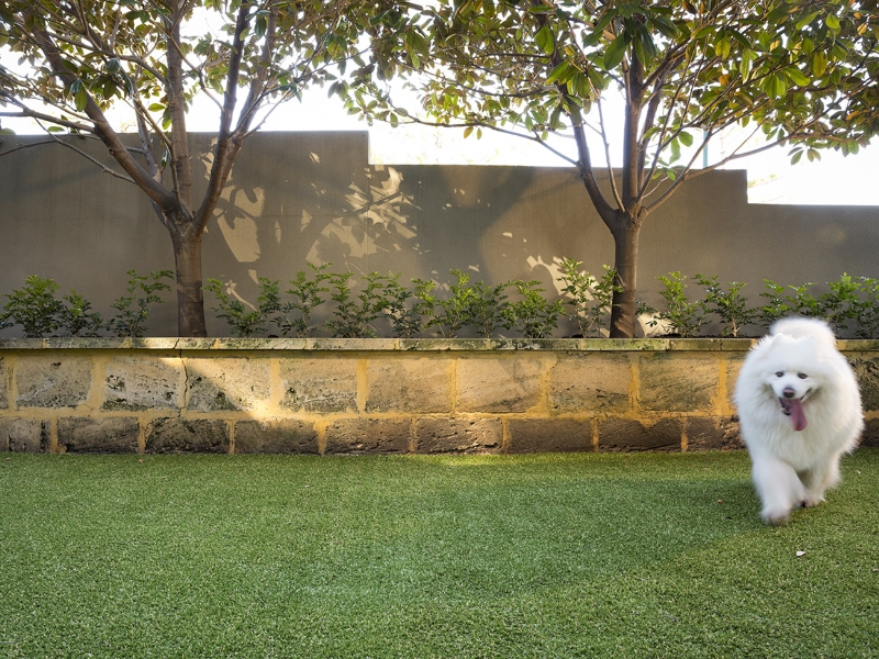 Introducing Petfill™ & Lawn Reborn™ - Ledge Point Country Club - Green Planet Grass