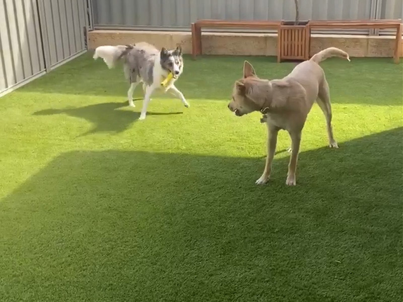 Pet Installations for your Dog & Cat - Green Planet Grass